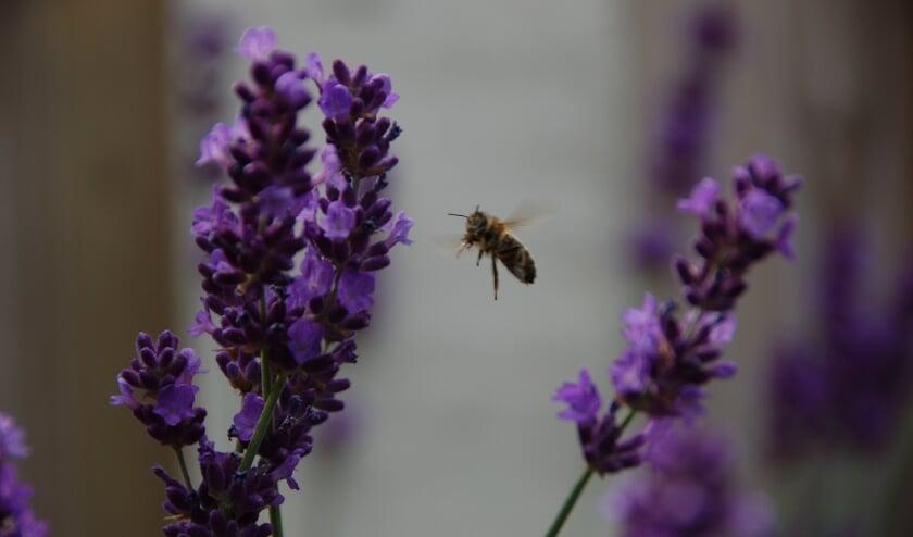 In bloeiende bermen met bloemen en kruiden voelen bijen, vogels en vlinders zich thuis. En het is een prachtig gezicht! (Foto: Ralf ter Beek)