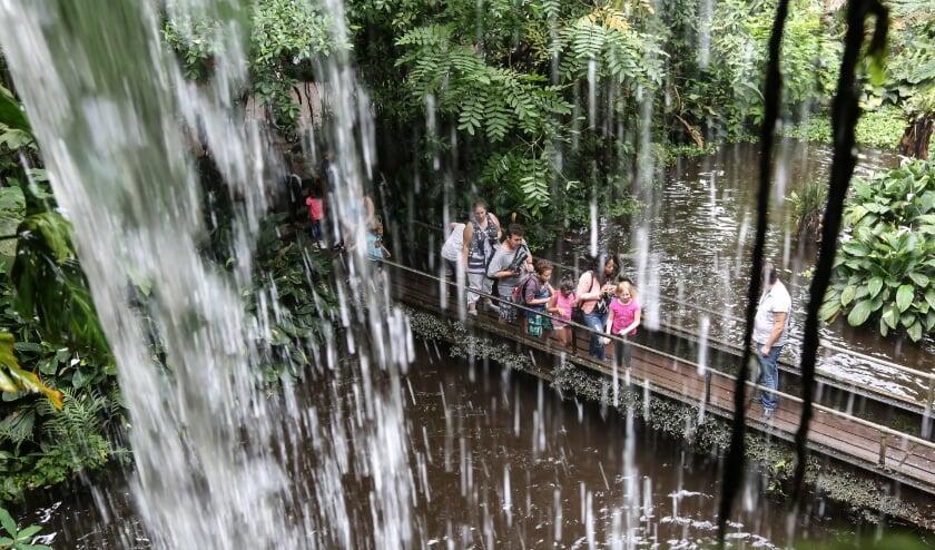 De Bush in het Arnhemse dierenpark is vanaf zaterdag ook 's avonds te bezoeken.