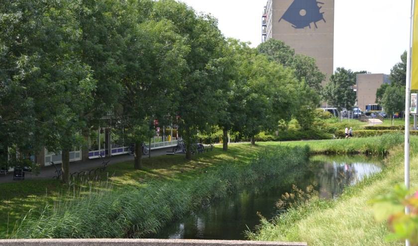 Het uitgangspunt voor groen in het nieuwe bestemmingsplan voor Alphen-Stad is dat structureel en beeldbepalend – zoals de Dijksloot – als 'groen' bestemd wordt, maar bermen bijvoorbeeld niet.