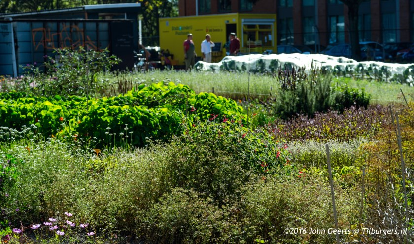 cursus ecologisch tuinieren