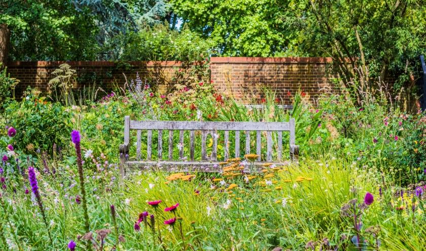 Je tuin compleet laten verwilderen is ook een optie, maar slechts het weghalen van een paar tegels helpt de natuur al. En heb je weinig ruimte? Dan kun je de hoogte in met hangplanten!