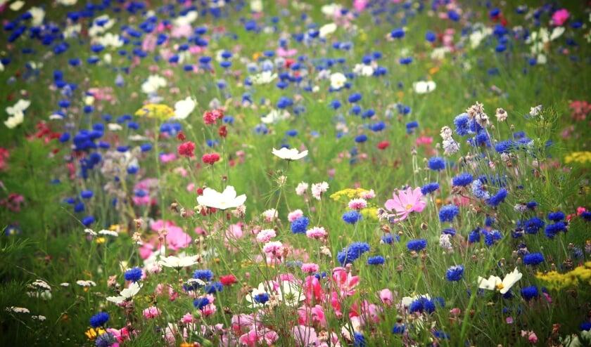 <p>Bij Steenvoorde zetten we letterlijk de bloemetjes buiten op zaterdag 29 mei tussen 10.00-16.00 uur.&nbsp;</p>