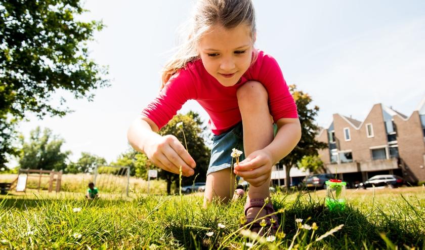 Ontdek de natuur in je eigen tuin dankzij de NatuurBingo! (Foto Gerke van der Hoef)