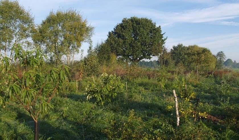 Voorbeeld van een voedselbos, dit is het voedselbos Ketelbroek bij Groesbeek.