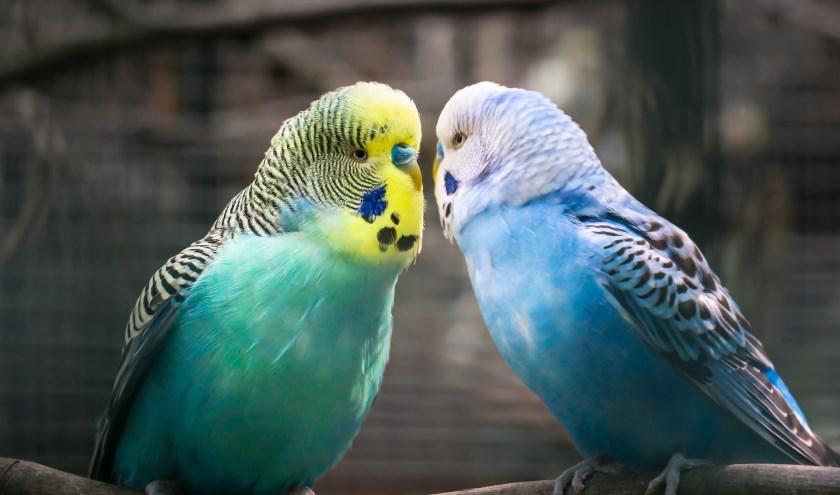 Bekende én minder bekende foto's zijn te zien op de vogelshow van Vogel-Eiland. (foto: Pixabay)