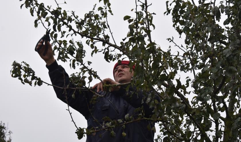 Voor de hoogstambrigade is IVN Rijssen-Enter ook op zoek naar versterking. (Foto ter illustratie / Van Gaalen Media)
