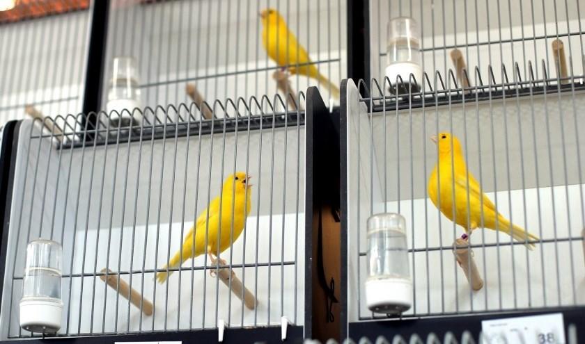Voor de vogelshow op 17 november zijn maar liefst 400 vogels ingeschreven. (Eigen foto)