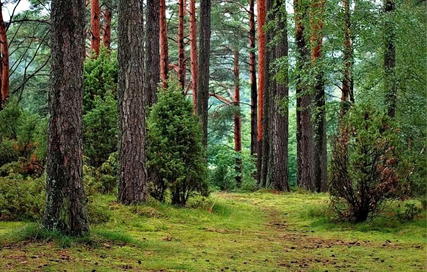 In Duitsland hebben veel mensen een eigen bos. De houtproductie gebruiken ze voor de verwarming van hun huis.