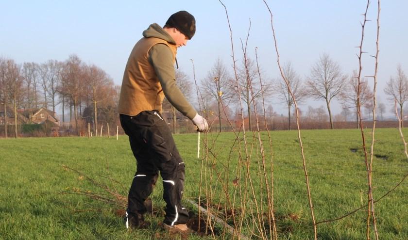 Doe mee en plant! 100.000 bomen en struiken in Gelderland.