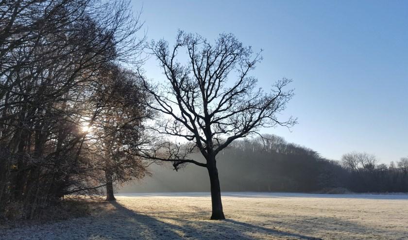 winterlandschap Kralingse Bos