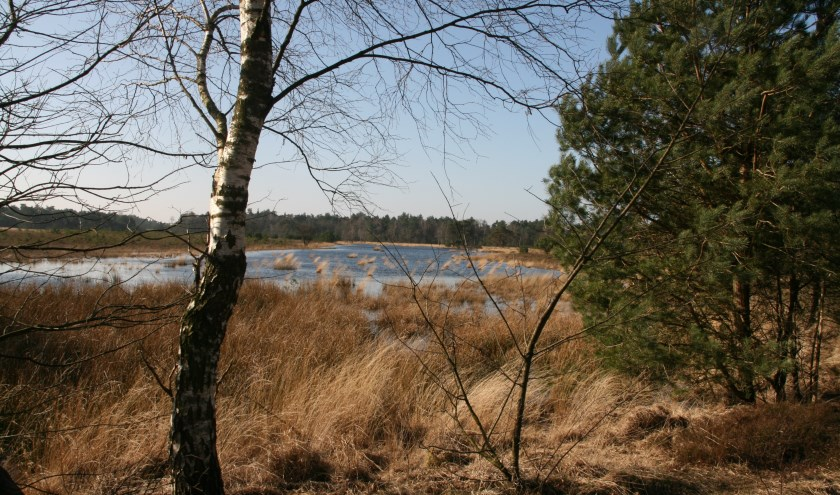 Gerritsflesch nabij Radio Kootwijk is een voorbeeld van kwetsbare natte heidegrond in een Gelders Natura 2000-gebied