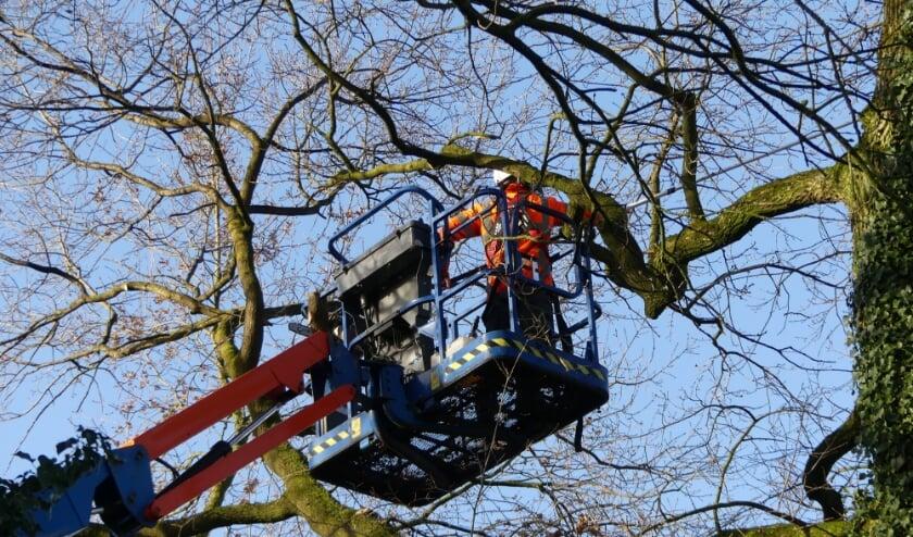 <p>De bomen die vanwege de veiligheid gekapt moeten worden zijn gemarkeerd. </p>