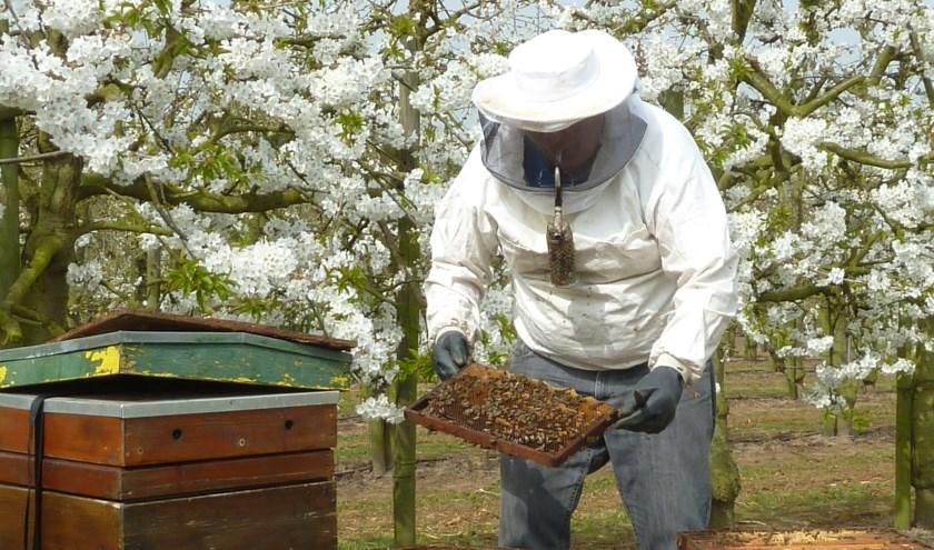 Imkers verhuizen dit voorjaar weer miljoenen honingbijen in hun bijenkasten naar fruitboomgaarden.