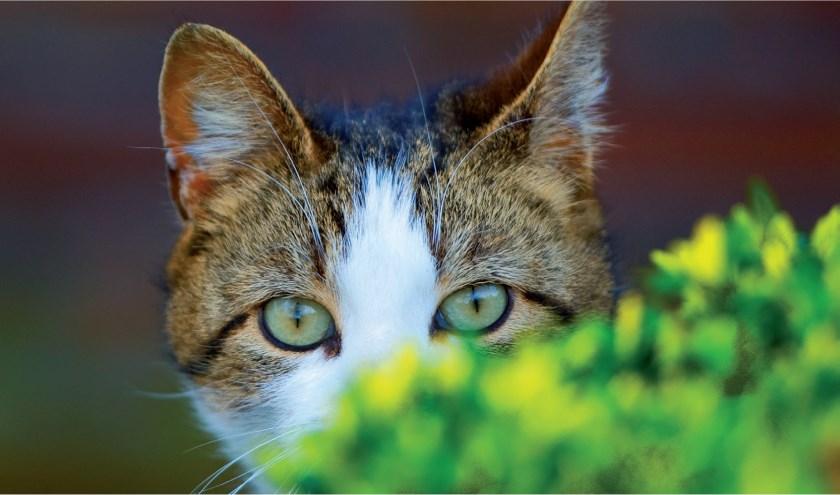 De buitenkatten hebben niet meer nodig dan een droge slaapplaats en dagelijks eten en drinken.