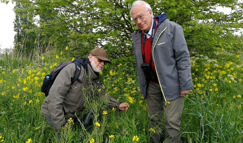 Aat Rozendaal (links) en Dick Brand tussen de natuur van de Broekpolder alvast op zoek naar bijen (FotoPeter Spek)
