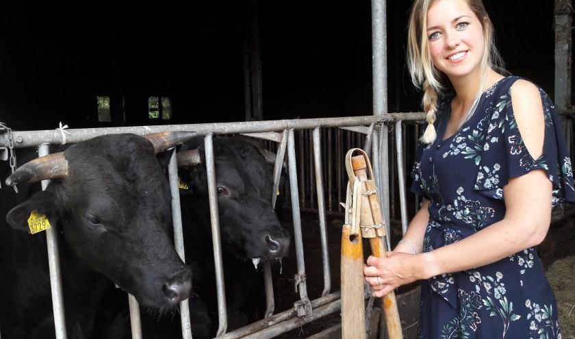 Vlegelvrouw Marjolein Vegter heeft een vlegel van de hilt gehaald en begroet nog even de stieren die nieuwsgierig de kop door het hek steken.