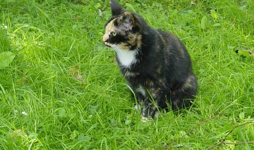 Poes Irma in het gras