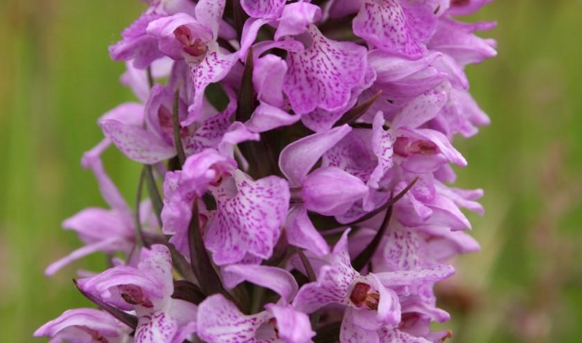 Een ontdekkingstocht naar orchideeën, ratelaars en ander kleurig spul.