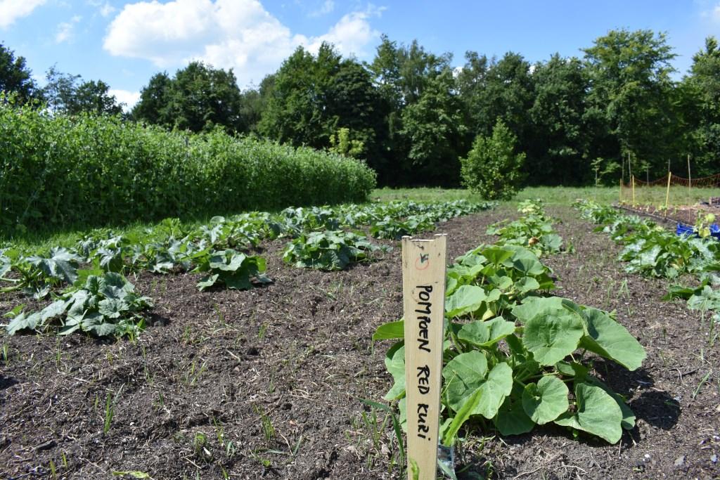 """Er groeit en bloeit het hele jaar van alles in de tuinderij, waar je zelf mee kunt oogsten. Van spinazie tot komkommers en van bloemkool tot tomaten. Marlèn: """"Verser dan dit krijg je het niet hoor!"""" Foto:  © DPG Media"""