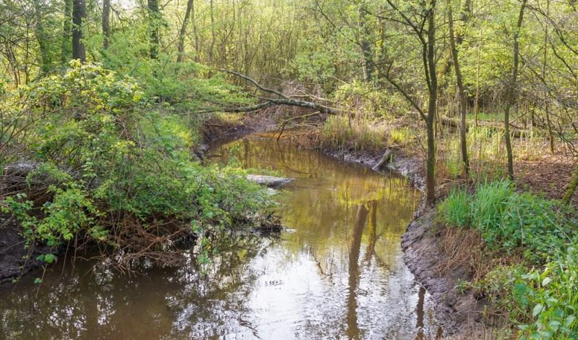 De Groote Beerze stroomt door een lappendeken van velden, bos, akkers en landerijen tussen Bladel, Hapert en Oirschot.