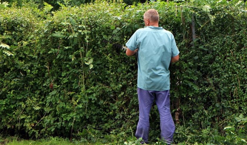 De activiteitencommissie van de Van Hallware (Zwolle-Zuid) isopzoek naar mensen die in de tuin willen werken.