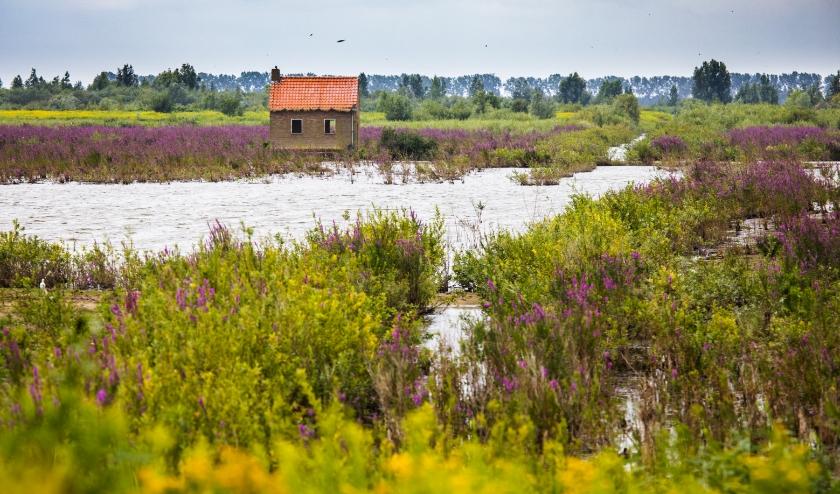 Natuureiland Tiengemeten is weer te bezoeken. (Foto: Privé)