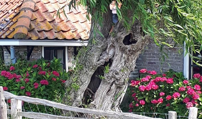 Zo gaaf om te zien hoe deze boom maar doorgroeit.