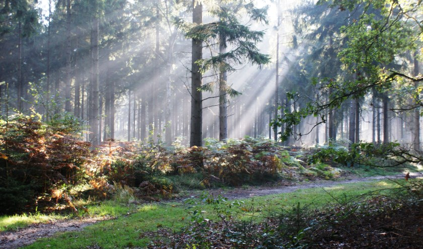 Een mooie lichtinval in het bos in september. (Foto: Aly van Eijk)