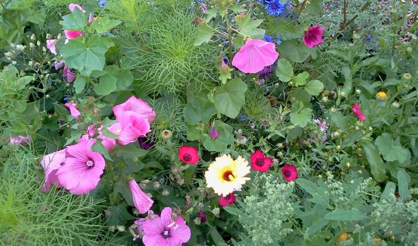 bloemenmengsel – Corry Dierdorp