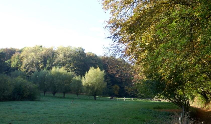 Op de Limburgse heuvelhellingen vinden we nog bossen met grote diversiteit. FOTO: Picasa.