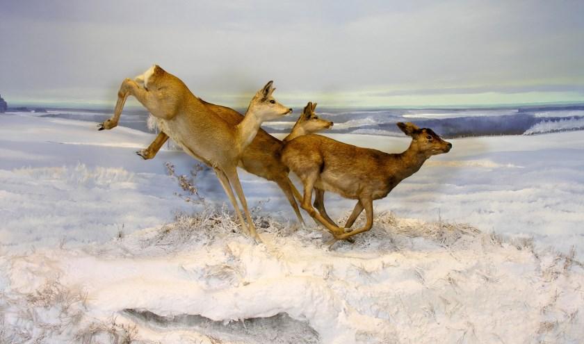 De reeën in het winterse tafereel lijken zo weg te springen.  (Foto: Han Bouwmeester)