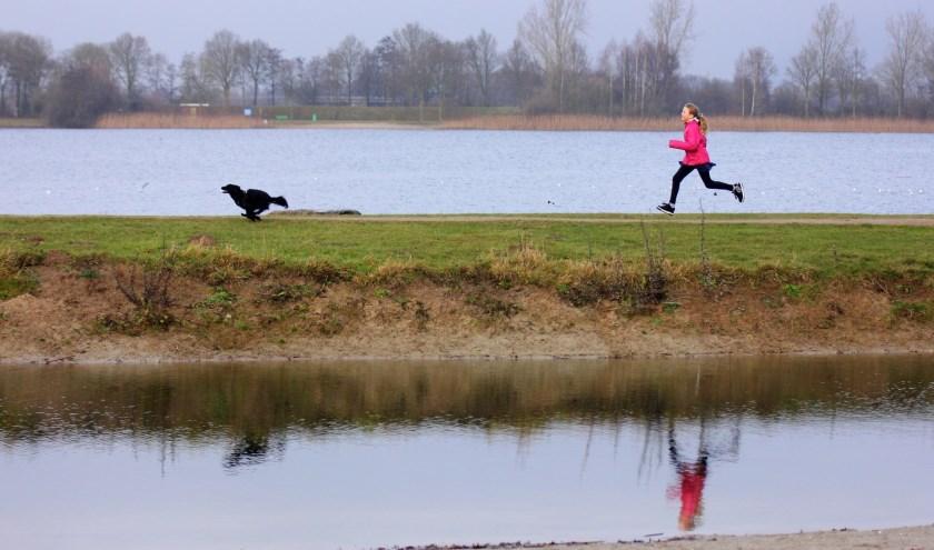 Op dinsdag 1 oktober gaat het laagseizoen van start op recreatiegebied Rhederlaag. Vanaf deze datum zijn honden weer welkom.