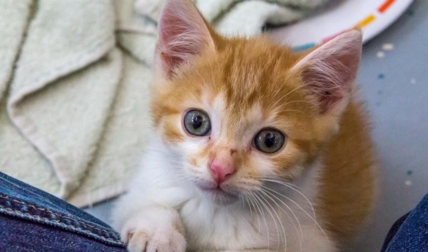 Muizenvangers, huiskatten, zonaanbidders zoeken allemaal een thuis. Foto: Dierenbescherming