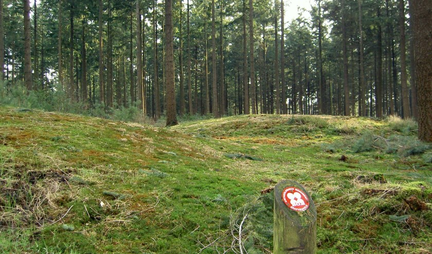 In ons land is Ermelo de gemeente met de meeste grafheuvels. (foto: Stichting NMP Ermelo)