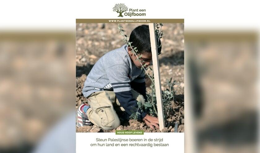 Jonge aanplant, dit jaar al minstens 16.000 bomen.