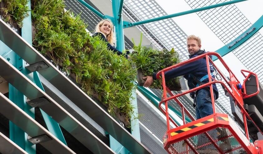 <p>Wethouder Gaby van den Waardenburg en Perry van Berkel (Du Pr&eacute; Groenprojecten) helpen bij het aanbrengen van de plantenbakken. Foto: Dave van Hout.</p>