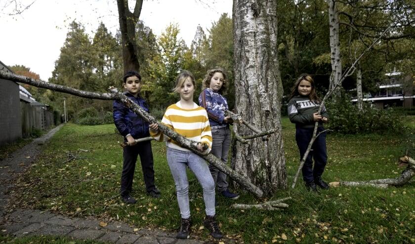 <p>Kinderen uit de buurt laten de takken van de dode berk zien, tien minuten later was de boom geveld. Foto: Jan van den Berg</p>