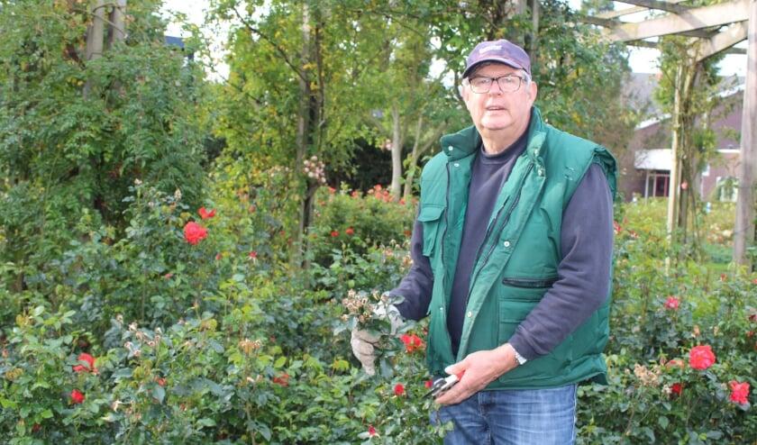 <p>Jan den Haan is bestuurslid en vrijwilliger bij Stichting tot Behoud van Rosarium Boskoop. FOTO: Morvenna Goudkade</p>