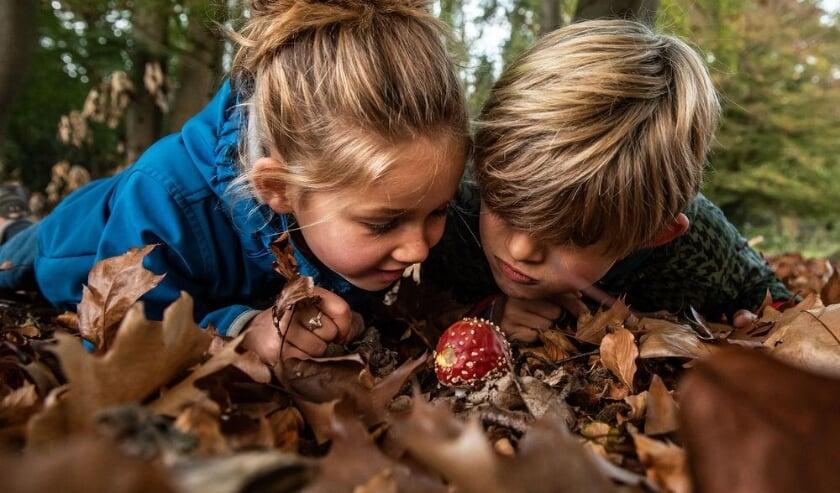 <p>Ben je nog op zoek naar leuke tips voor de vakantie met de kinderen? Ga de natuur in om paddenstoelenbingo te spelen.</p>