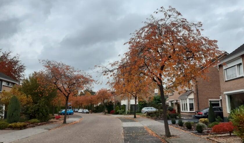 Herfst in de Melissehof. Foto: Jacqueline van der Steele