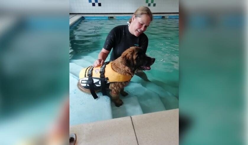 <p>Niet alle honden zijn direct gewend aan het water. FOTO: Dierenkliniek Dennenoord..</p>