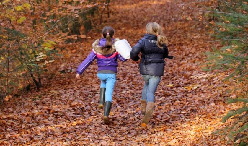 <p>Veertien procent van de provincie Utrecht bestaat uit bos en open natuurlijk terrein. </p>
