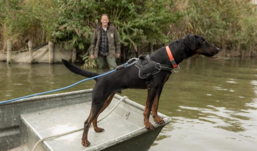 <p>Speurhond Hunter zoekt vanaf de boot naar verse sporen van een muskusrat.&nbsp;</p>