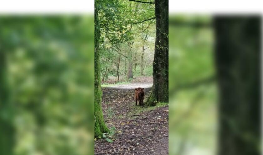 <p>Nieuw stierkalf in Broekpolder</p>