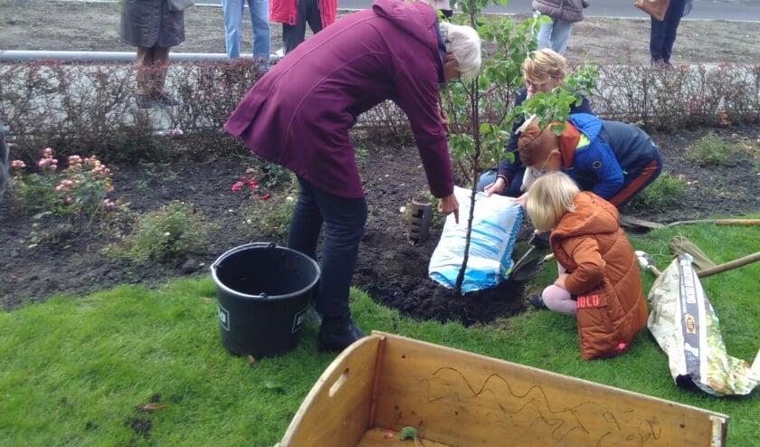 <p>kinderen planten de perenboom</p>