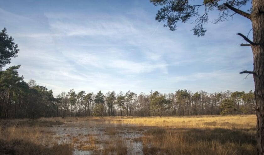 <p>De variatie aan landschappen, bos, heide, weide, poelen en beken is op de 'paradijselijke' wandelroute zeer groot.</p>