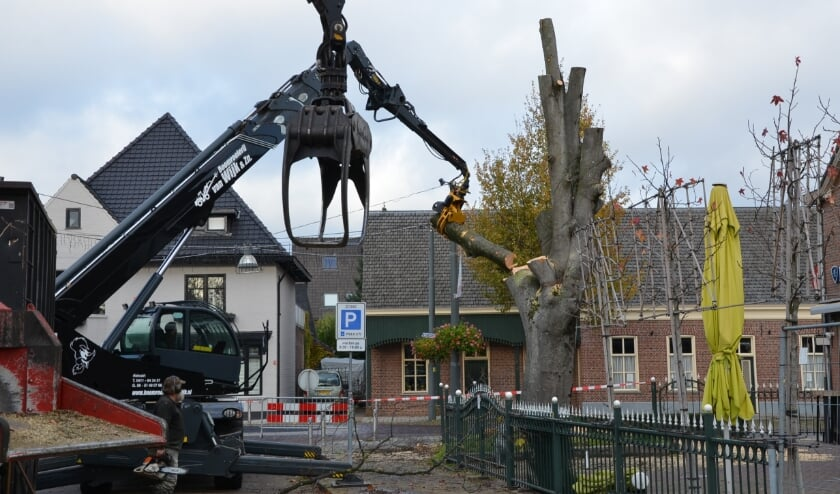 <p>De beukenboom bij caf&eacute; d&#39;n Ekker ontmanteld.</p>