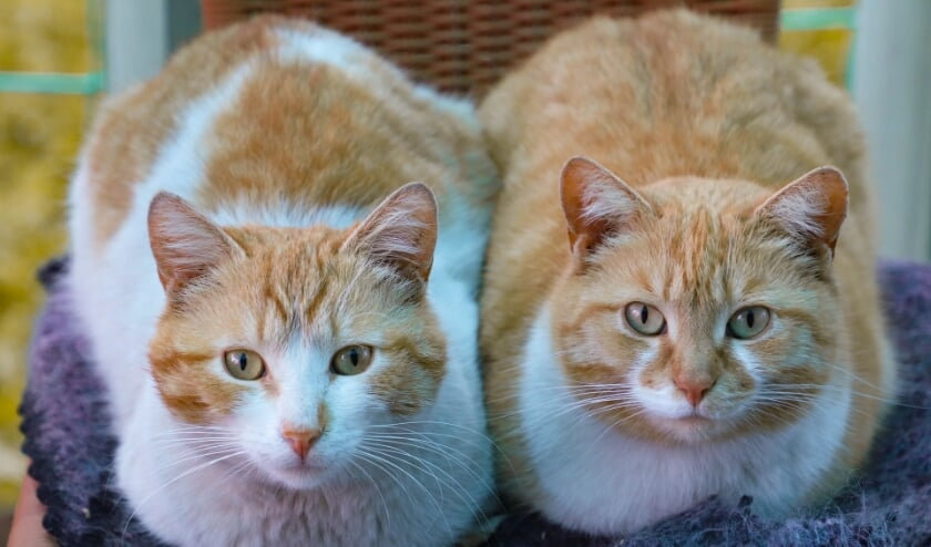 <p>Het gaat niet alleen om huiskatten, maar in sommige gevallen ook om (ex)zwerfkatten.&nbsp;</p>