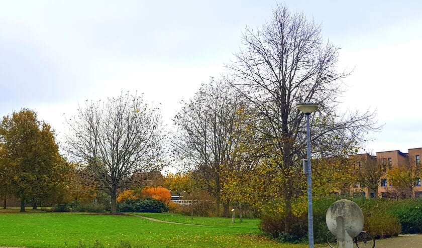 <p>Bomen in het Muziekpark in de wijk Drielanden, Harderwijk.</p>