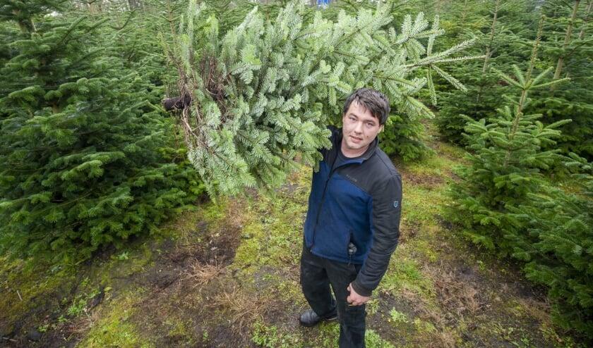<p>Nico Lohuis van Lohuis Hoveniers heeft de eerste kerstbomen al verkocht. (Foto: Robert Hoetink)</p>
